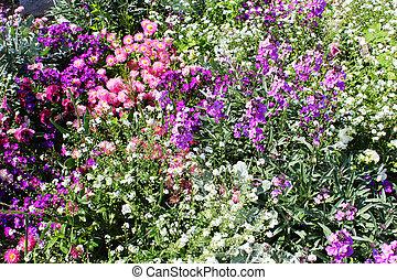 Flowers in a garden in France.