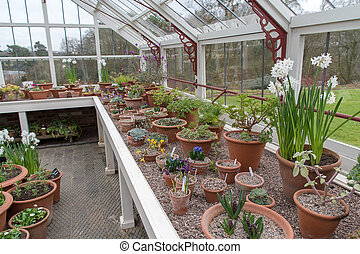 Flowers in a greenhouse