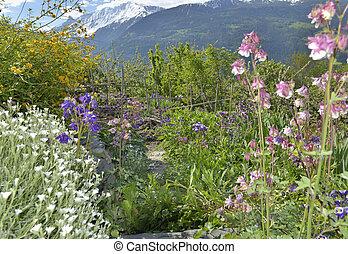 flowers in a mountain garden
