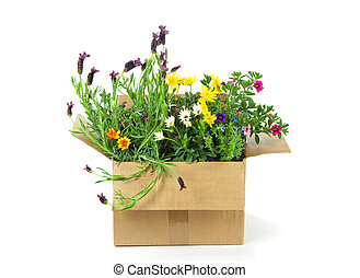 Flowers in a parcel on white background