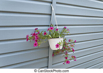 Flowers in a pot hanging on the wall.