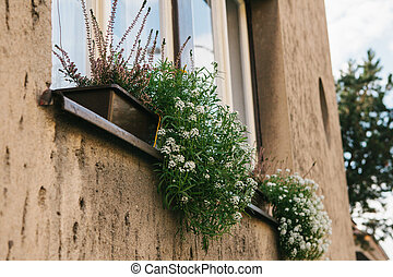 Flowers in a pot on the window