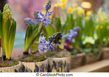 flowers in a vase spring summer