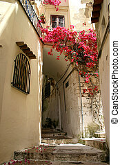 Flowers in alley - Beautiful flowers growing in a small...