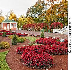flowers in autumn park