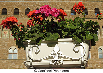 flowers in box  with decorative lily of Florence on cafe terrace, Piazza Signoria in Florence