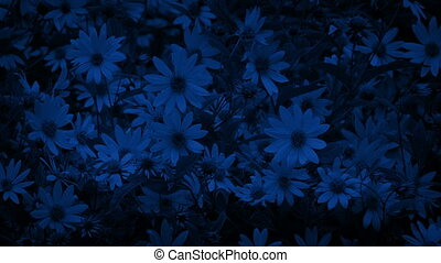 Flowers In Breeze At Night - Lots of flowers moving in...