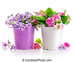 flowers in bucket with green leaves