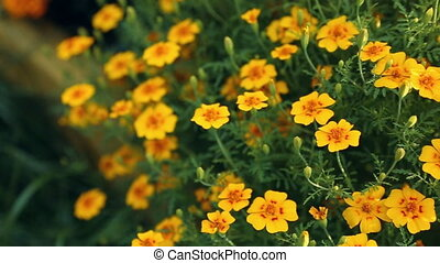Flowers in closeup