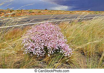 Flowers in Desert Storm