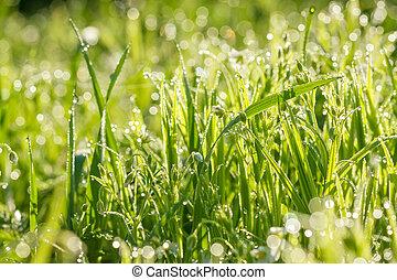 flowers in dew drops on a spring meadow