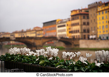 Flowers in Florence