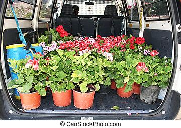 Flowers in gardener car