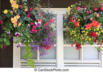 Flowers in hanging baskets with white window and brown wall.