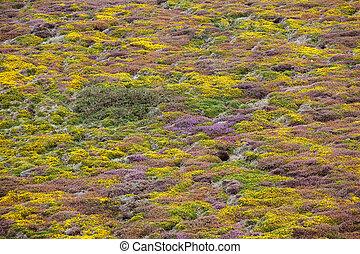flowers in moor