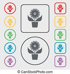 Flowers in pot icon sign. symbol on the Round and square buttons with frame. Vector