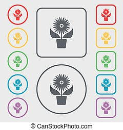 Flowers in pot icon sign. Symbols on the Round and square buttons with frame. Vector