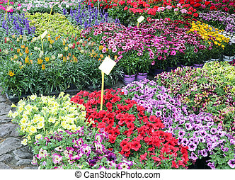 flowers in pots and plants for sale with tag price