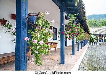 Flowers in pots, in an old hacienda, Ibarra, Ecuador