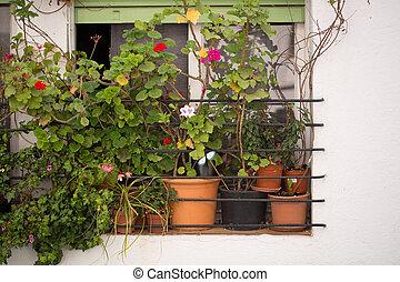 Flowers in pots on the window