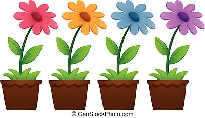 Flowers in pots on white