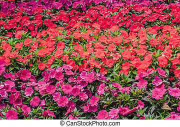 Flowers in red an violet colors
