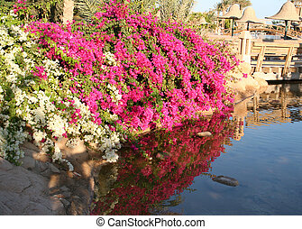 Flowers in Resort Sharm-Al-Sheikh
