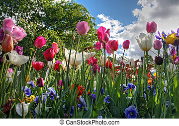 Colorful park in springtime with trees and flowers