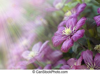Flowers in sun light - Beautiful flowers in sun light