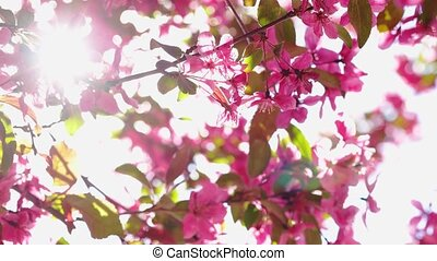 flowers in sunny day spring blossom, close-up on branches with sunlight, 4k