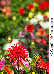 Flowers in the Butchart Gardens, Victoria, British Columbia...