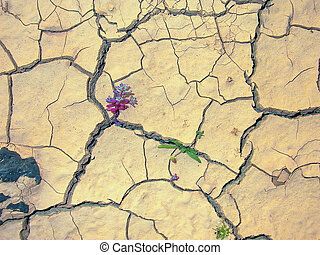 flowers in the desert grow on cracked loam