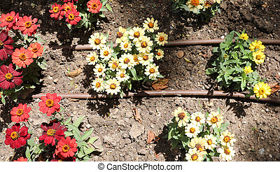 flowers in the garden and pipes of irrigation system
