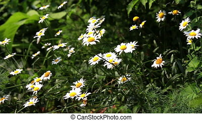 flowers in the garden