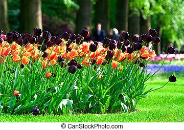 Flowers in the Keukenhof Park