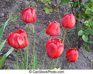 Flowers in the spring garden