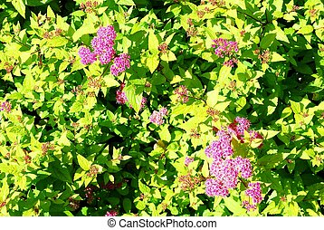 Flowers in the sun background with green leaves