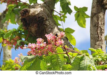 flowers in tree