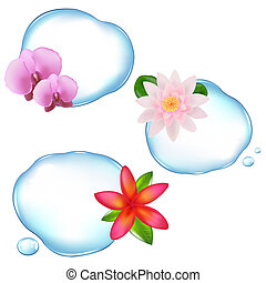 Flowers In Water - 3 Flowers Over Water, Isolated On White...