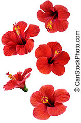 flowers isolated on white. Colorful illustration. - flowers ...