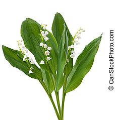 flowers., lírios, de, a, vale, isolado, sobre, branca