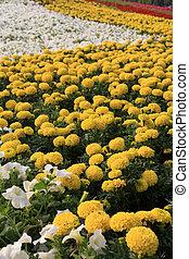 flowers landscape in a park