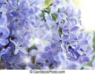 flowers., lila
