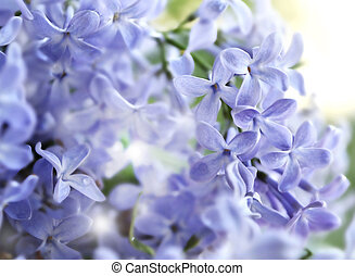 flowers., lilas