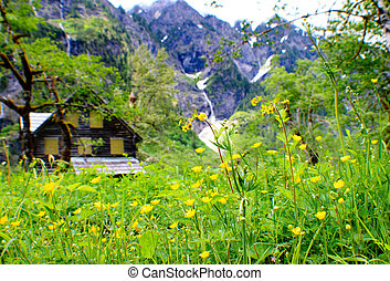 Flowers lining Cabin in the Woods