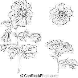 Flowers mallow, contours