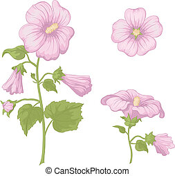 Flowers mallow, isolated - Pink flowers mallow with green...