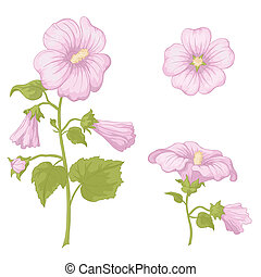 Pink flowers mallow with green leaves, isolated on white background