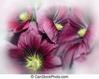 Flowers, Malva, sylvestris