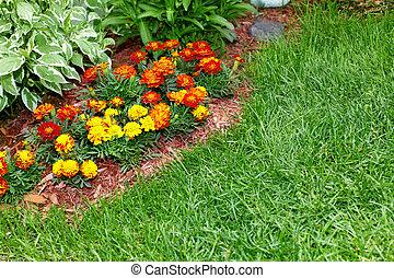 Flowers marigold in the garden.
